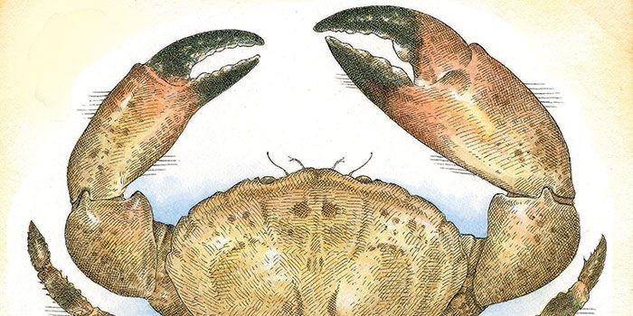 stone crab claws | Garden and Gun