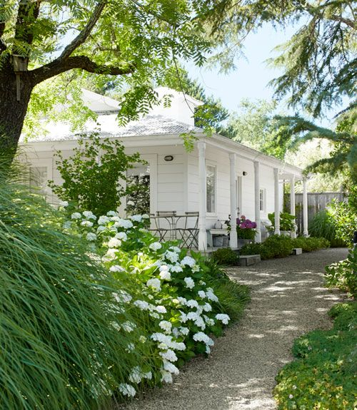 Northern California Farmhouse and Garden - Guesthouse - 'Blushing Bride' hydrangeas and 'Morning Light' ornamental grasses soften the path to guesthouse with a wraparound porch.