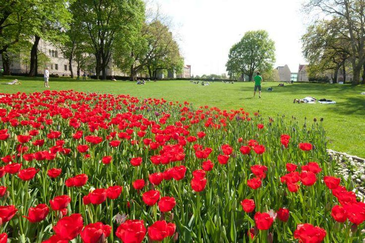 Poznan Poland, park im. A. Mickiewicza [mat. Miasto Poznań]