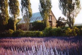 Lavandula. I have seen so many photos of this property in magazines. A taste of Europe (Swiss Italy) in Victoria, Australia. Restored stone buildings, a lavender farm, olive grove, cafe with fresh produce, shop in the barn. Forget trendy shops and galleries in Melbourne - this is on my 'must see' list if I ever visit Victoria!