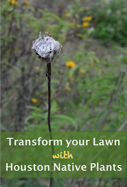 Houston Native Plants: Live Healthy By Transforming Your Lawn