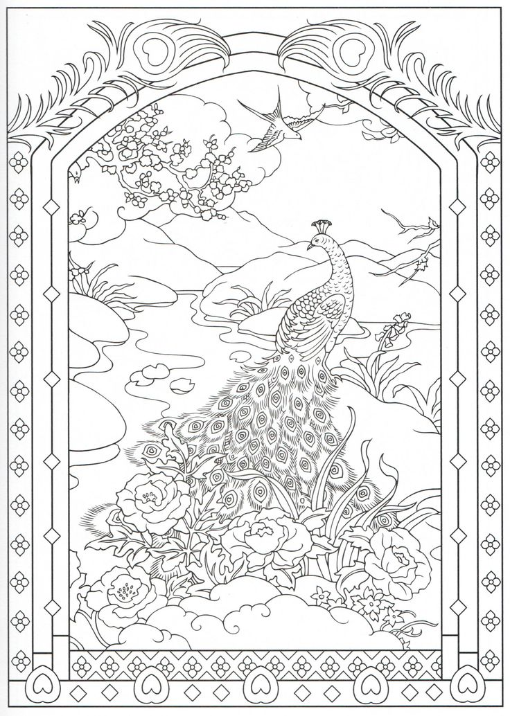 Peacock coloring page 21/31