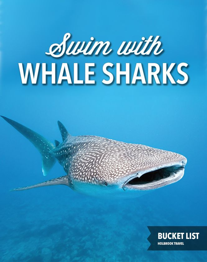 Bucket list: Swim with whale sharks