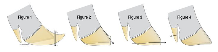 Pictures that demonstrate where the hooves can be trimmed to achieve the balance in the hoof area that a pig needs.