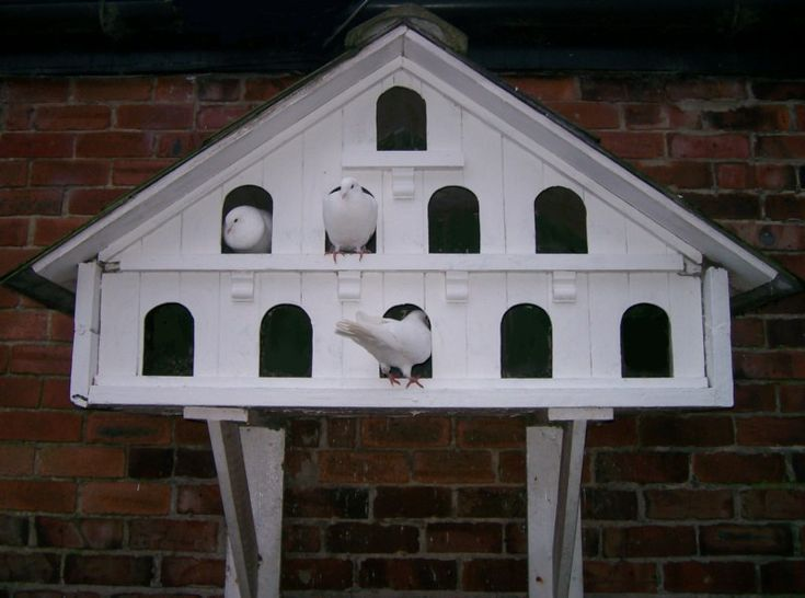 Best 106 dovecotes images on pinterest other annapolis for Dove bird house plans