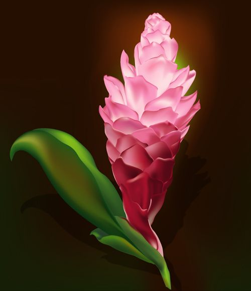 Illustrator Tutorial: Gradient Mesh Flower | Vector Diary