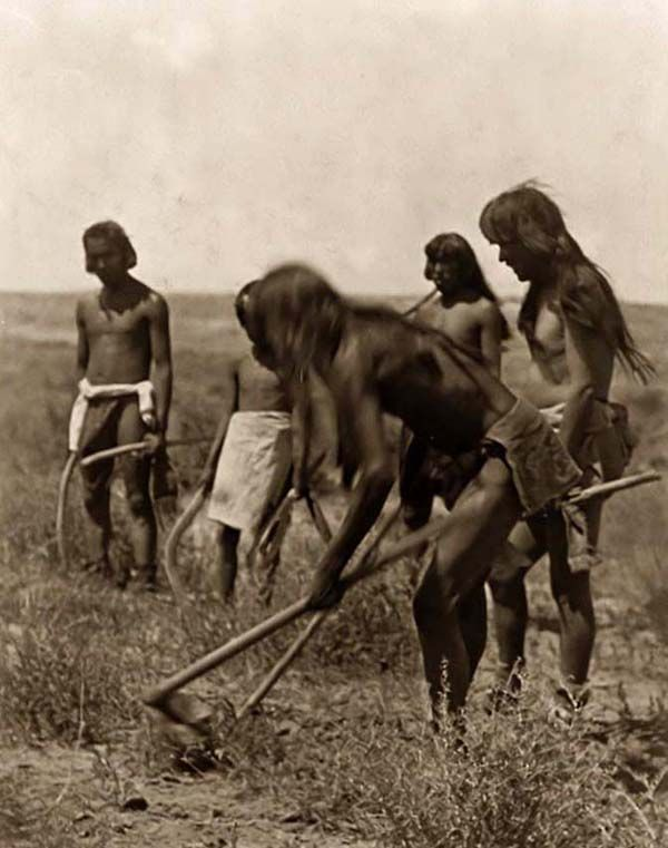Above we show a vital photo of Hopi Indians Digging Out Snakes. It was made in 1907 by Edward S. Curtis.    The illustration documents a Group of Hopi Indians using hoes to dig out snakes.    We have compiled this collection of artwork mainly to serve as a vital educational resource. Contact curator@old-picture.com.