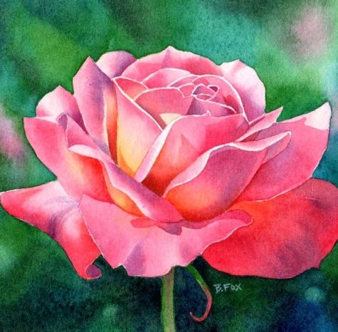 COLOR MAGIC rose flower watercolor painting, painting by artist Barbara Fox
