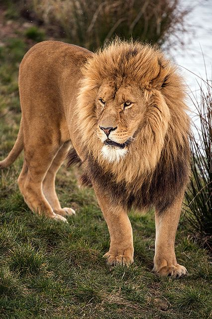 Yorkshire Wildlife Park 29/03/13 by Dave Hunt Photography on Flickr.