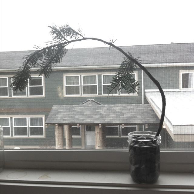 Charlie brown Christmas tree!