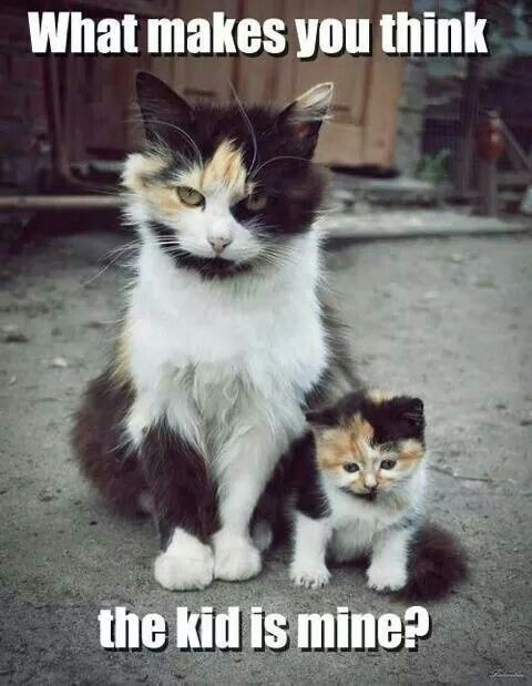 Kitten is yours... no dought about it!