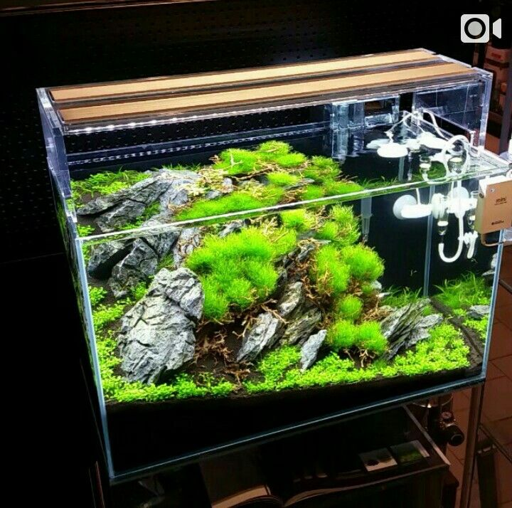Freshwater Aquascape Ideas: Aquascaping: A Collection Of Ideas To Try About Art