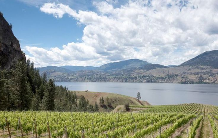 Canada's Okanagan Valley: The best wine region you've never heard of #wine #wineeducation #winetasting #canada #okanagan