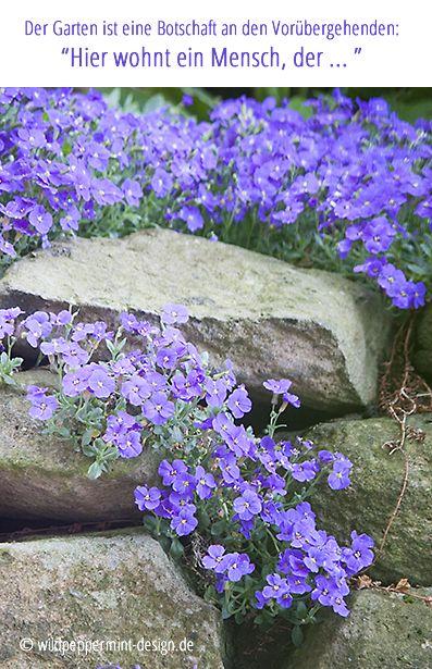 Der Garten als Visitenkarte. Blaukissen im Vorgarten, was sagt der garten über die bewohner aus, wildeschoenheiten.wordpress.com