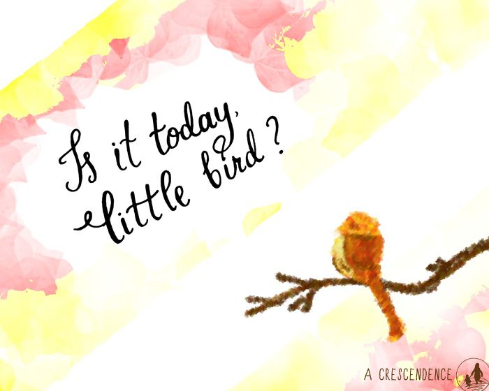 Is it today, little bird? Tuesdays with Morrie quote lettering and illustration by ACrescendence