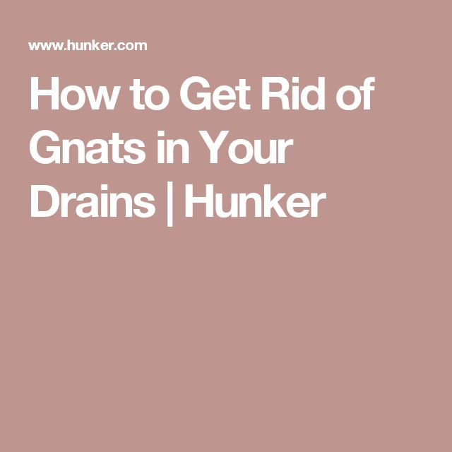 how to get rid of gnats outside your door