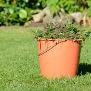 Como acabar com ervas daninhas no gramado