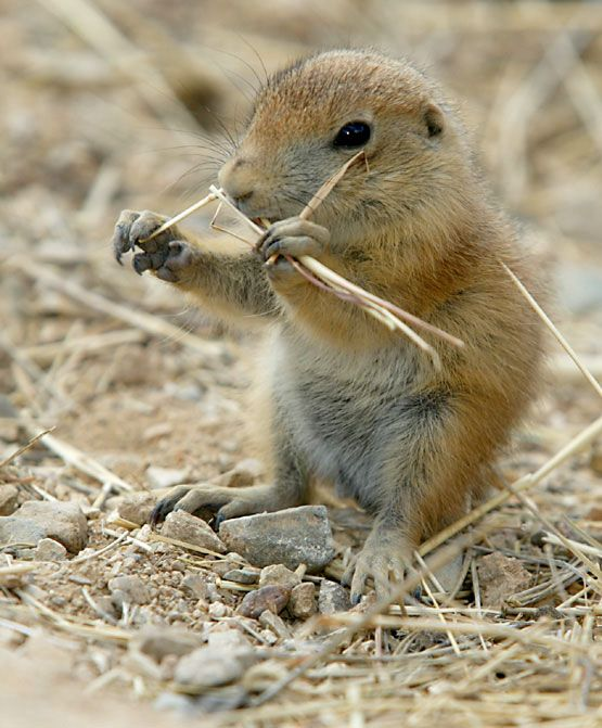Kid Facts About Prairie Dogs