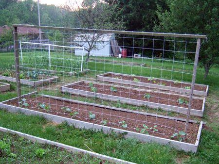 Trellis ideas gardening pinterest - Build a garden trellis ideas ...