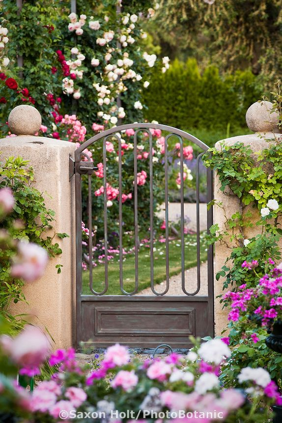 Metal garden gate on stucco pillars entry into rose garden;  in California country garden