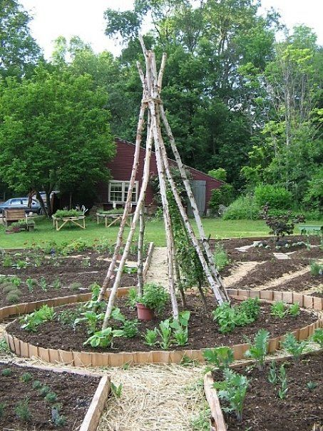 19 best images about vegetable garden layout ideas on for The perfect vegetable garden