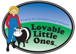 Mini Cows For Sale | Miniature Cows For Sale | Lovable Little Ones in Loveland CO