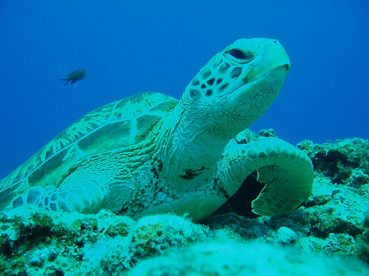 I saw a Turtle when the snorkeling.