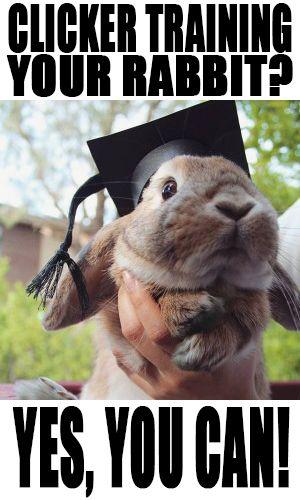 clicker training kaninchen anleitung pdf free