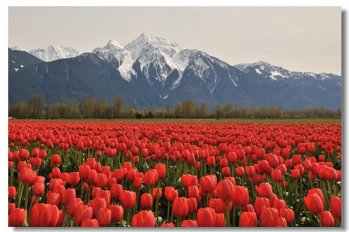 Chilliwack Great Vancouver BC Canada