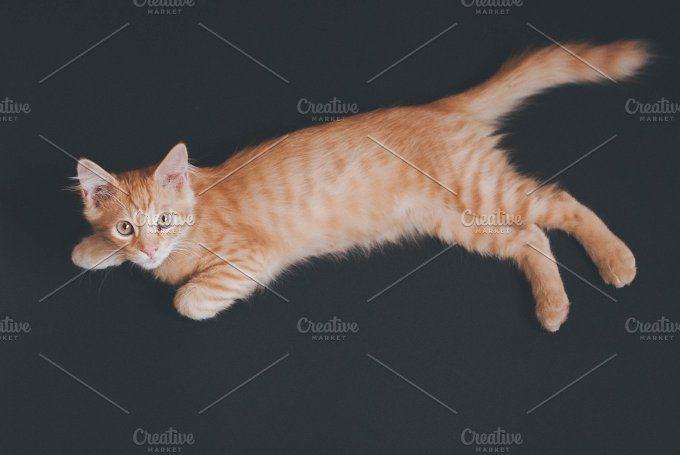 Little orange domestic kitten  by Gnesa on @creativemarket