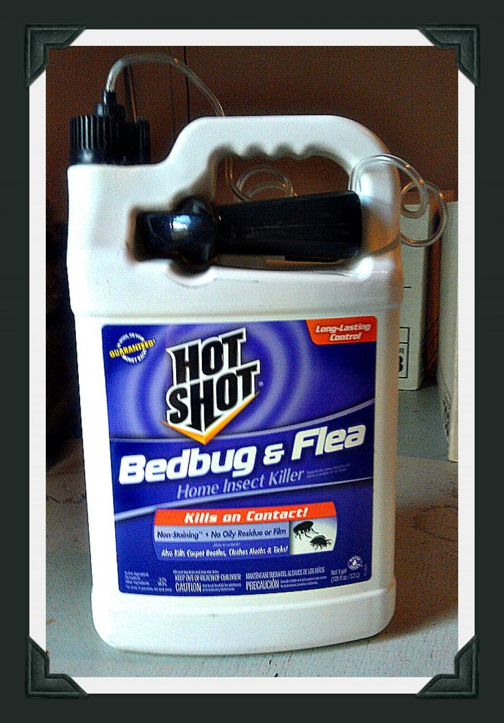 Hot Shot Bed Bug Spray Review Simple, Products and Hot shots