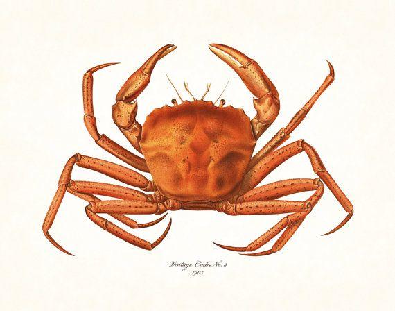 Vintage Crab Print No. 22, Giclee, Art Print, Nautical Art, Beach Decor, Coastal Art, Print, Collage, Natural History Art, Illustration – animal king