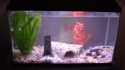 Diy Fish Aquarium Pvc Pipe Idea For The Aquarium