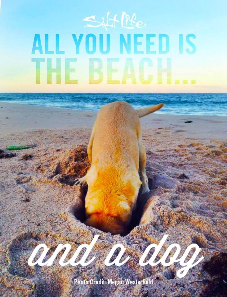 Sometimes your best friend on the beach is your dog!