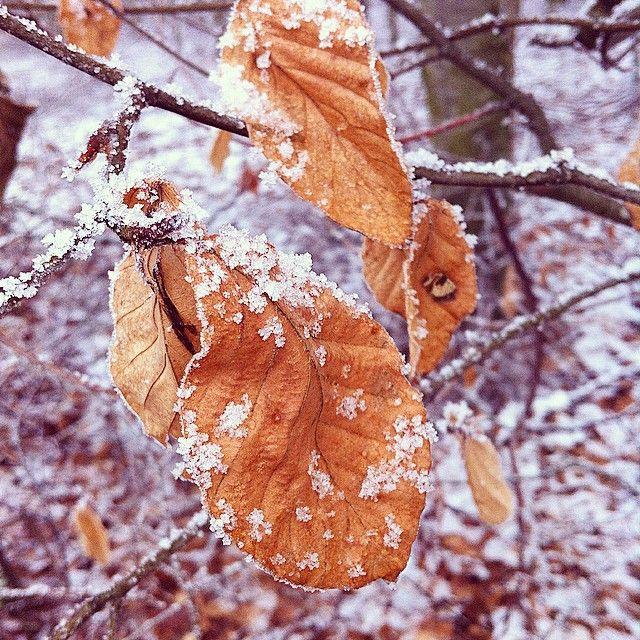 Gåtur i #skoven og kolde tæer! #vinterlandskab #småglimt #winterinDenmark #snow #nature