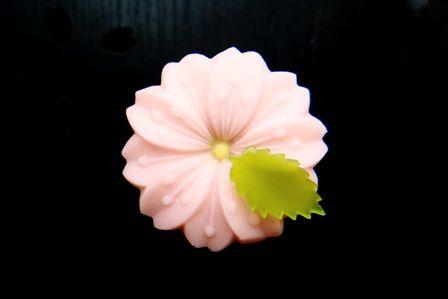 さくら Sakura - Cherry blossom