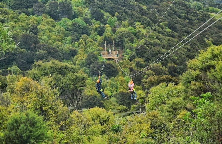 Suka dengan liburan yang menantang adrenalin? Ecozip Adventure di Waiheke menantang Anda untuk melaju bebas melewati area hutan sepanjang 1,5 kilometer! Fantastis!  #pemandangan #waiheke #adrenalin #ecozip #adventure #nzmustdo #nz #luxurynz #adventure #journey #traveling #awesome#holiday #instalike #instamood #bestoftheday #bestmoment #nzmustdo#bestoftheday #bestmoment #outdoor