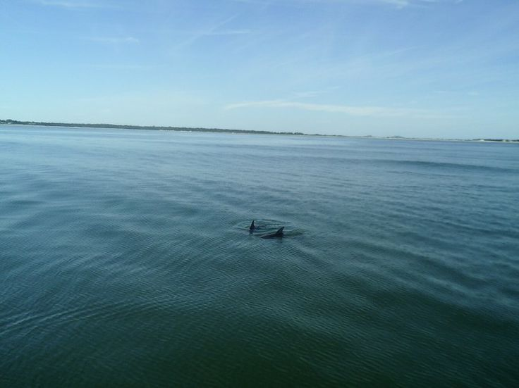 A afternoon with the bay Dolphins