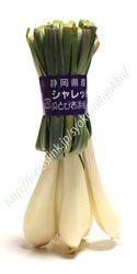 エシャレットエシャレットは品種名ではなく、ラッキョウを土寄せし、軟白栽培して若いうちに収穫したものです。当時、「根らっきょう」という名称では売れないだろうと言う事で、筑地の大手青果卸、東京中央青果常務の「川井彦二」さんがヨーロッパの「エシャロット」に似ていたことから名付けられたそうです。 一般的なラッキョウほど香りやクセが強くなく、生のまま食べられます。