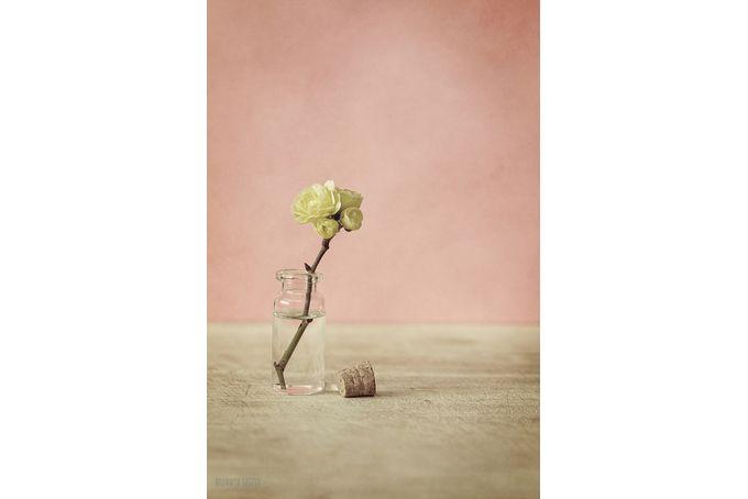 Spring Blossom by Bronwyn Katzke Photography