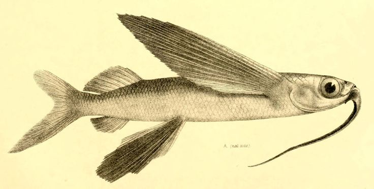 Výsledok vyhľadávania obrázkov pre dopyt albert gunther fish
