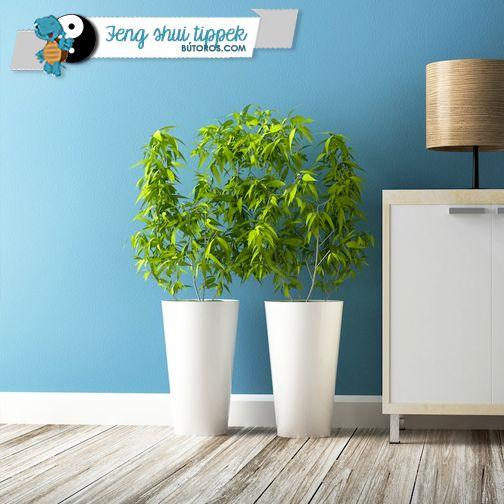 INDÍTSD BE AZ ENERGIÁK ÁRAMLÁSÁT!  A zöld növények jólétet és bőséget hoznak otthonunkba azáltal, hogy élettel töltik meg a környezetet, és otthonunkba vonzzák a pozitív energiákat. A hálószobában különösen hasznos lehet egy zöld leveles növény vagy citrusfa, ami megtisztítja a levegőt, így segít a megrekedt energiák mozgósításában. #fengshui #hálószoba