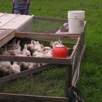 I would love to have chickens one day.  How to Keep Chickens - Chicken Coops