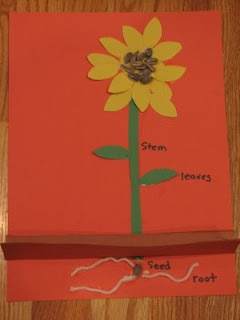 """sunflower plant part craft to teach parts of a flower. Great follow up to Eric Carle's """"The Tiny Seed"""" @Erin B B B Edell"""