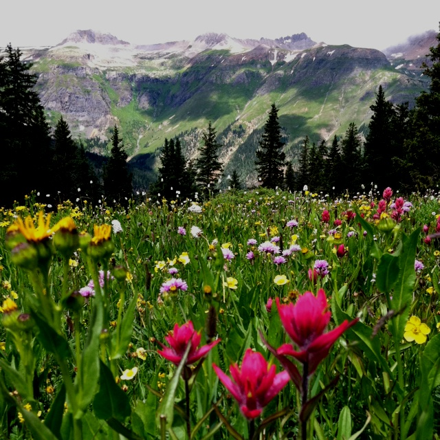 51 best colorado flowers images on pinterest beautiful places home sweet home san juan mountains ouray colorado colorado flowerspagosa springsrelaxing mightylinksfo