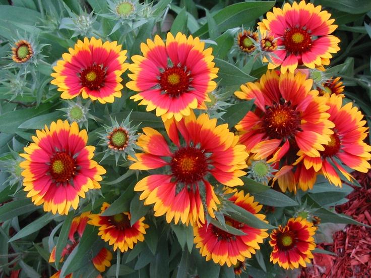 17 Best Images About Garden Delights On Pinterest Sun