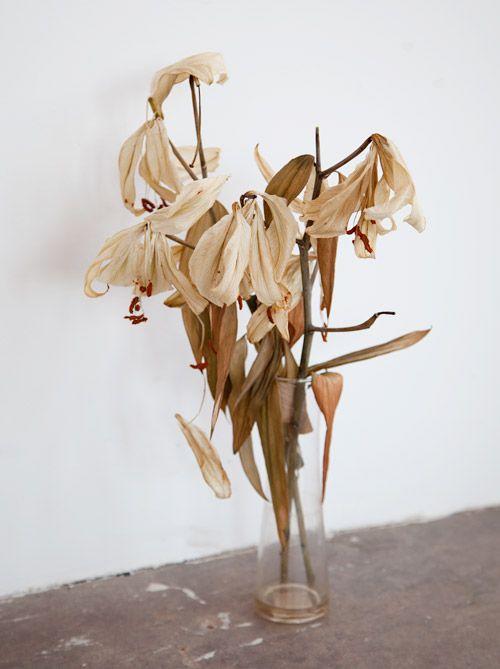 "Jody Rogac: ""Flowers ... a degradation"""