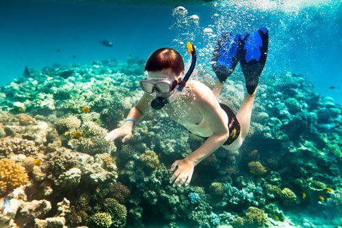 La plongé de corails, une activité très bien aimée à Cu Lao Cham.