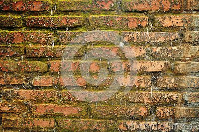 Moss brick wall texture grunge abstract & backgrounds, take on 2014-11-13 - http://www.dreamstime.com/stock-photography-image49263763#res7049373