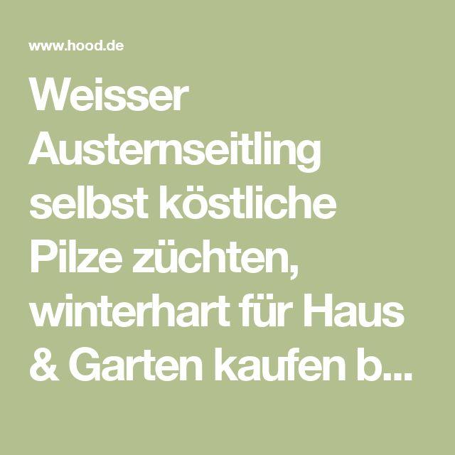 Epic Weisser Austernseitling selbst k stliche Pilze z chten winterhart f r Haus u Garten kaufen bei Hood